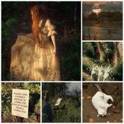 Softroro's collage.jpg