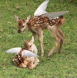 Angel deer