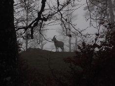 Ram in Forest.jpg