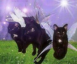 Fairy grunge cats.jpg