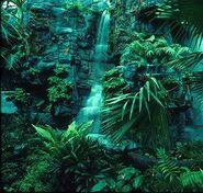 Jungleae