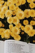 Book and Yellow Flowers
