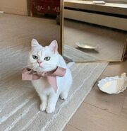 Cat with bow