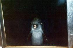 Dolphin-.jpg