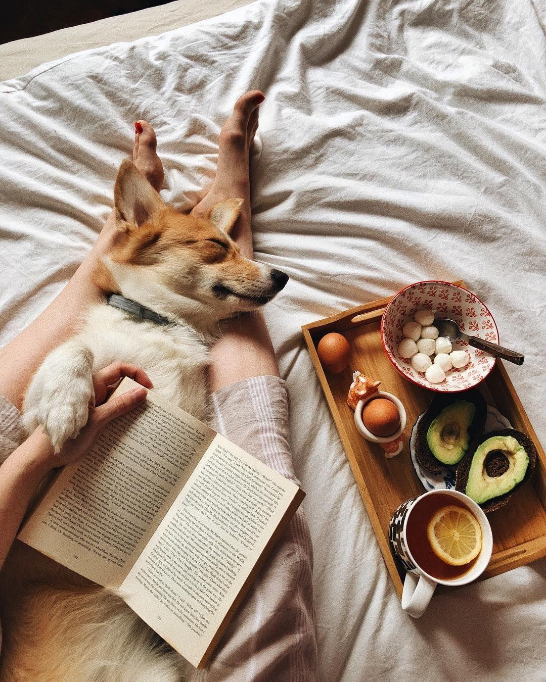 Comfy/Cozy