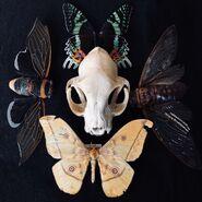 Cat-stull-butterflies
