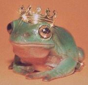 Frogcore.jpg