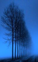 Mistytrees