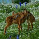 Naturecore loving deers