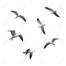 Gull Witch 13