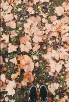 Autumn VSCO 6