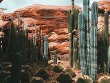 Desertwave