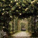 Ornate-garden-arch