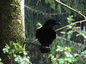 Ravencore