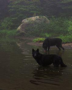Wolves .jpg