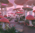 Fairycore Mushrooms