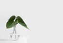 Minimal-Minimalist Plant