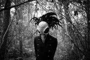 Bird-skull-4433244 1920