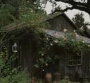 Pretty moss cottage