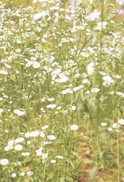 White Cottagecore Flowers.jpg