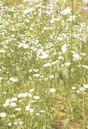 White Cottagecore Flowers