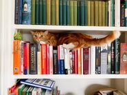 Cat in bookshelf