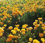 Flowers huff
