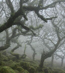Foggy moss forest