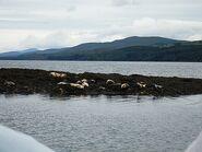 Sealsonirishwaters-s1