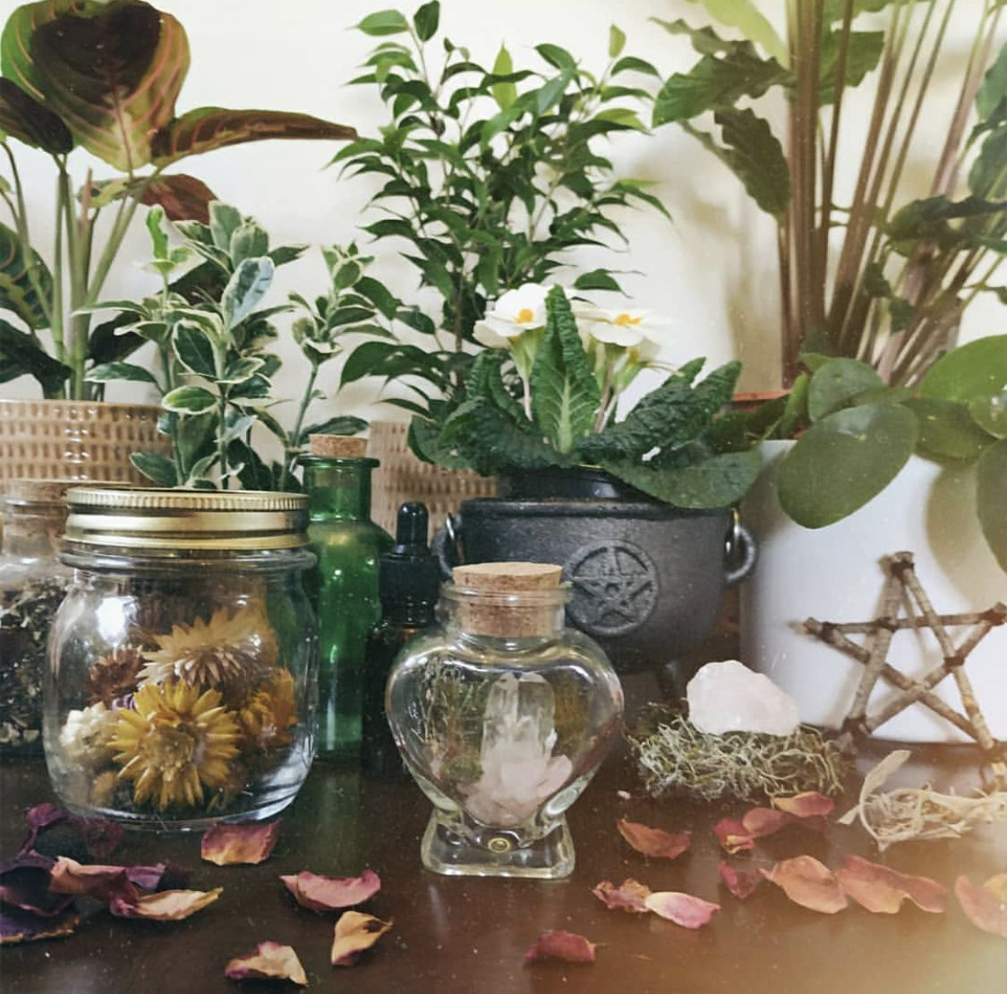Witchcore-Herbs Plants and Jars.jpg