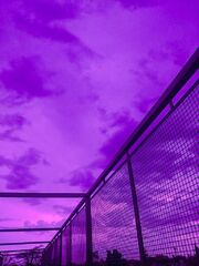 Purple cotton candy dreams.jpg