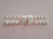 Morute teeth