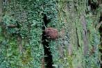 Myxomycete mushroom on moss
