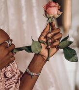 Vintage parisian rose