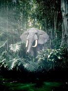 Elephantjungle