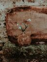 Natural Philosophy-White Flowers and Moss