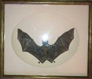 Morute bat