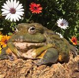 Froggie with flowers