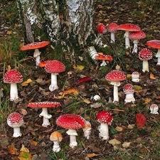 Mushroomcore