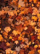 Autumn-111315 480