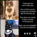 Anarchist cats