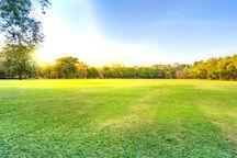 Open Field.jpg