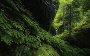 Landscape-nature-waterfall-forest-ferns-moss-green-trees-hill-oregon-wallpaper-preview