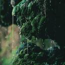 Mossy-rock-wet