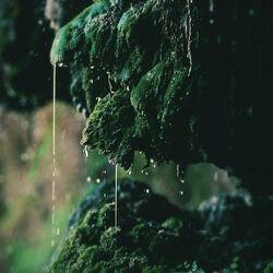 Mossy-rock-wet.jpg