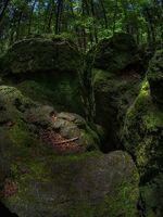 Rock-moss-forest-green