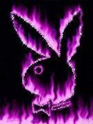 Purple flamin playboy (1)