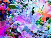 Litflowers