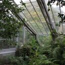 Natural Philosophy-Greenhouse and Plants