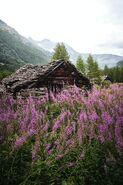 Lavendercabin